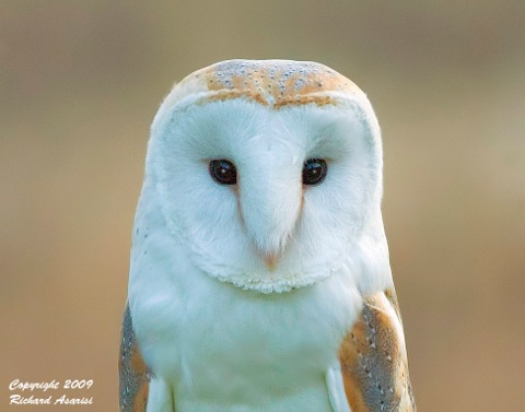 owl_head_RJA8908